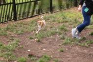 Munch enjoying a chase.