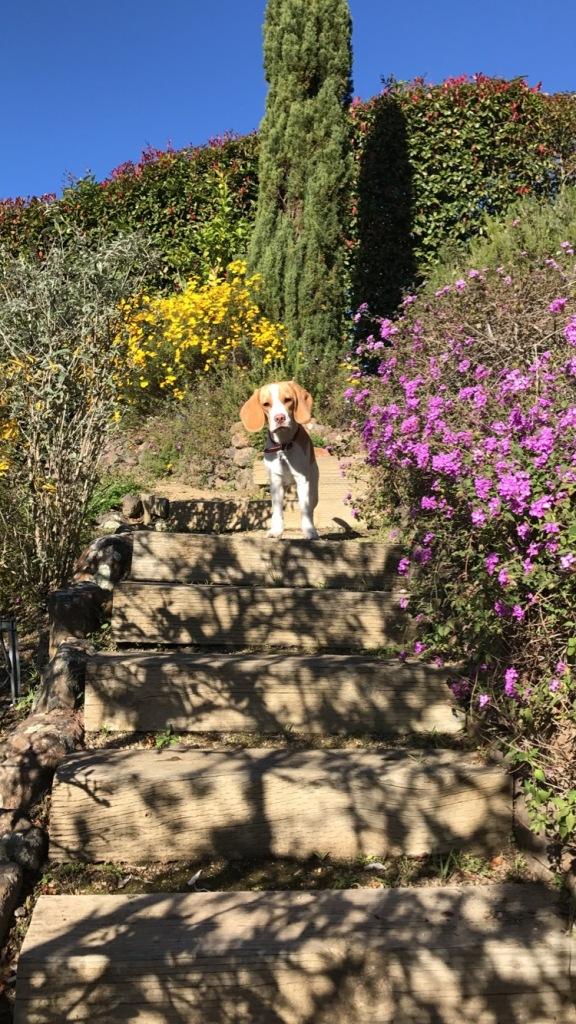 Sammich in the garden.